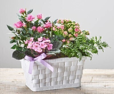 Pretty Mothers Day Planted Basket: Booker Flowers and Gifts